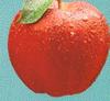 Applecrop3112x104